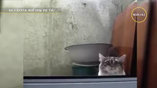 Без кота и жизнь не та.  Приколы про животных.  Смотреть всем