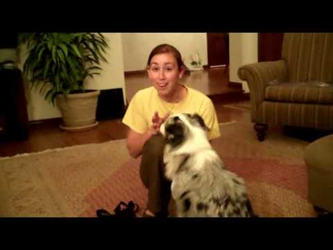 How to stop dog from barking when doorbell rings youtube how to stop dog from barking when doorbell rings eventshaper