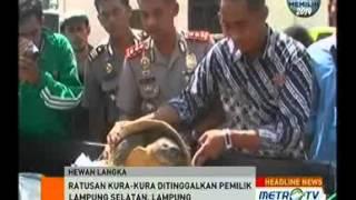 Polisi Sita 120 Kura-kura Tergeletak di Jalan Lintas Sumatra