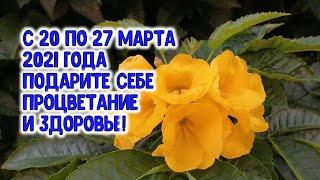 С 20 по 27 марта подарите себе процветание и здоровье. Как? Очень просто...