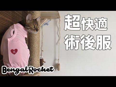 【ベンガル猫】Tuas避妊手術!!着心地抜群の術後服紹介 (Cat postoperative clothes) Bengal Cat【Bengal Rocket#28】