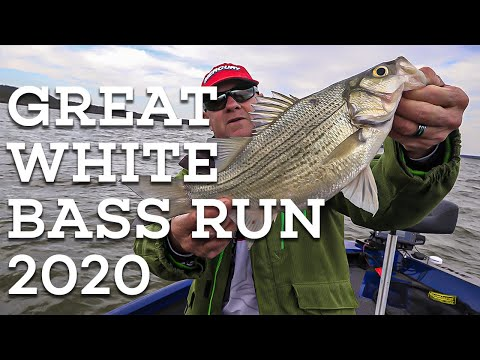 PRE-SPAWN WHITE BASS! Let's Fish SouthWEST #1 - 2020 Possum Kingdom Lake Texas White Bass Fishing