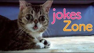 Самые смешные видео недели Июль 2016 || Подборка смешных видео Best Jokes №3