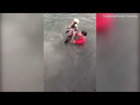 Kevin Campbell - Tourist Jumps On Pelican In Florida Keys