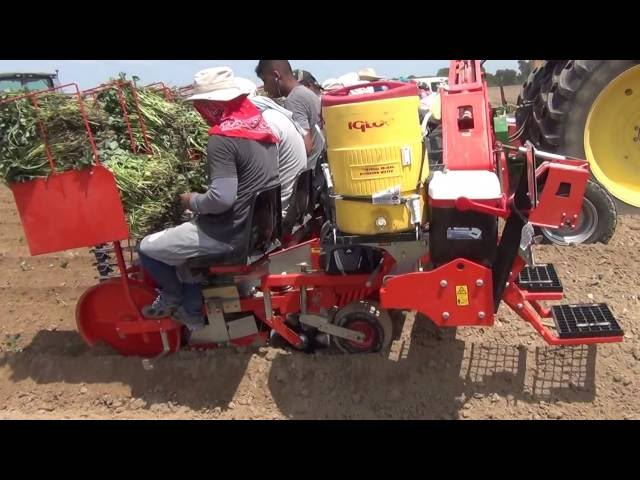 12 ROWS FOXDRIVE PLUS SWEET POTATOES TRANSPLANTER