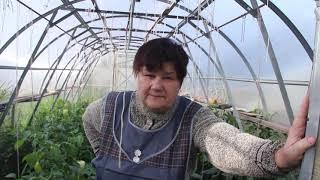 Так картошку сажать больше не буду! Огурцы прут, базилик и петрушка колосятся!