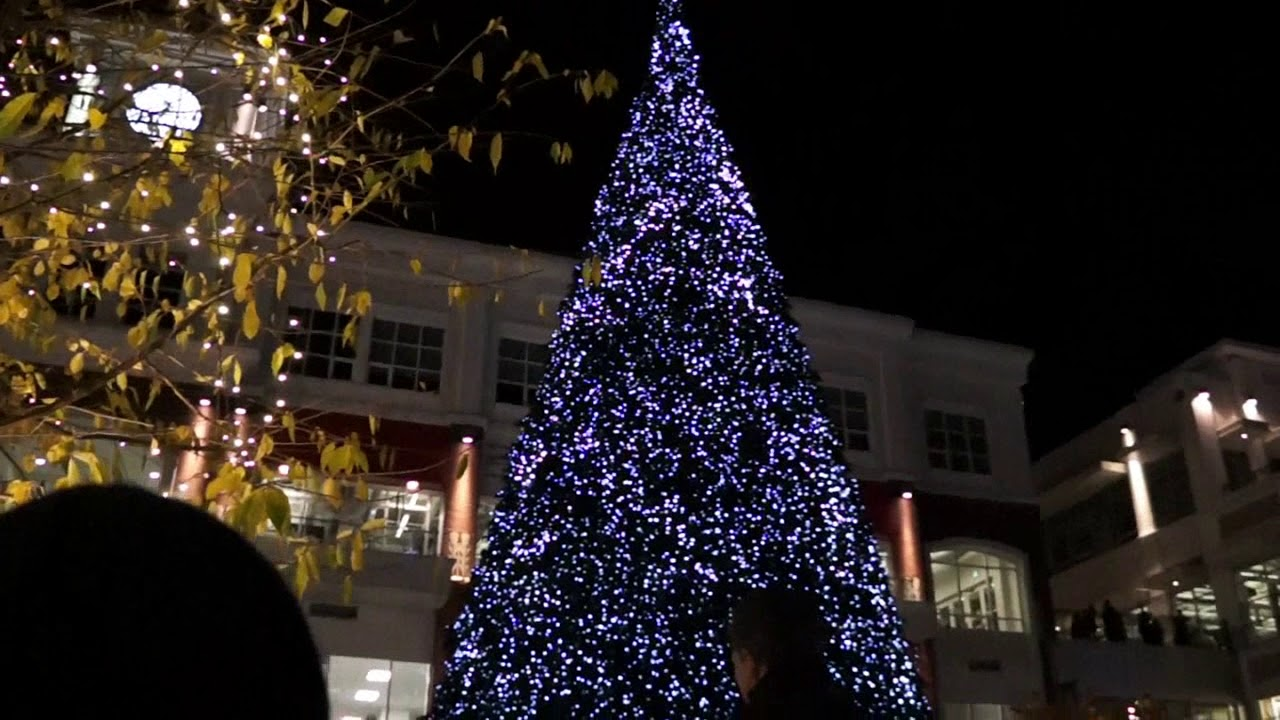 christmas tree victoria uptown christmas tree light up bc 4426