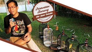DUNIA HOBI : Rahasia Perawatan Lovebird Jalal Ngekek Juara BnR Award