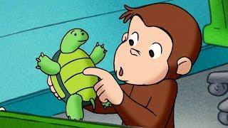 George O Curioso 🐵 Macaco Convidado 🐵Episódio Completo 🐵 Desenhos Animados
