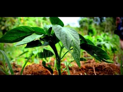 ZIMBALI RETREATS Commercial