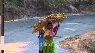Son helping mom to carry timber-wood in rural Rajasthan