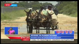Punda wa kiafrika wanazidi kuhatarishwa zaidi kutokana na soko linalopanuka