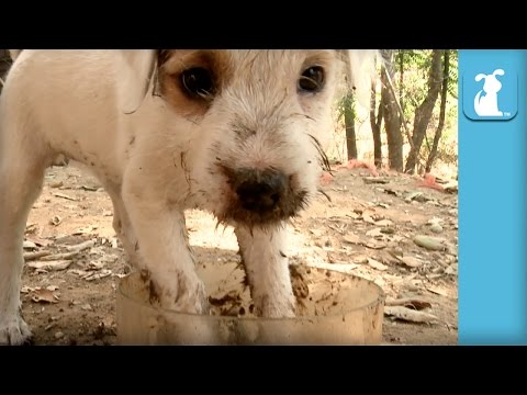 Hilarious Puppy Plays In Mud  Puppy Love