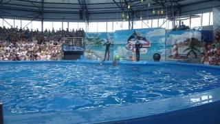Шоу дельфинов в парке развлечений Сочи Парке