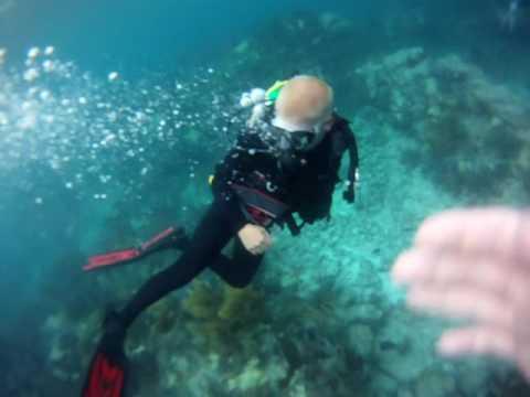 Diving Molasses Reef Part of John Pennekamp Coral Reef State Park