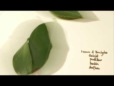 Avey Tare - Melody Unfair (Panda Bear Remix) (Official Audio) Mp3