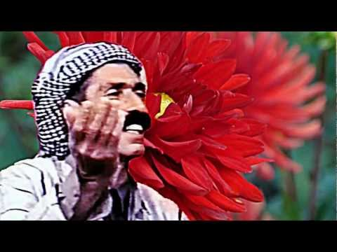 Mihemed Pîro - Stirana : Qado