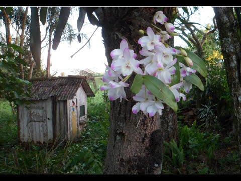Interior do Brasil - Orquídeas