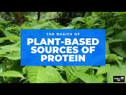 THE TOP 8 FORAGE CROPS: With The Highest Crude Protein Content