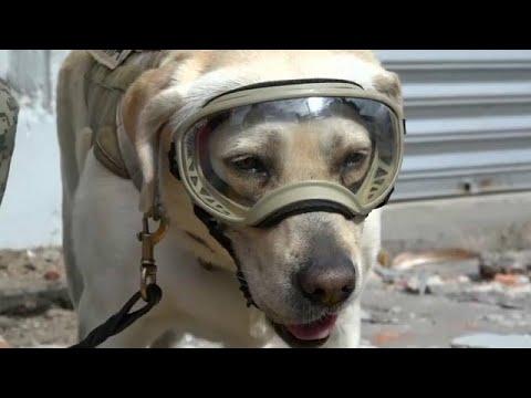 شاهد: حفل تقاعد كلبة الإنقاذ المكسيكية فريدا  - نشر قبل 15 دقيقة