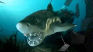 shark videos