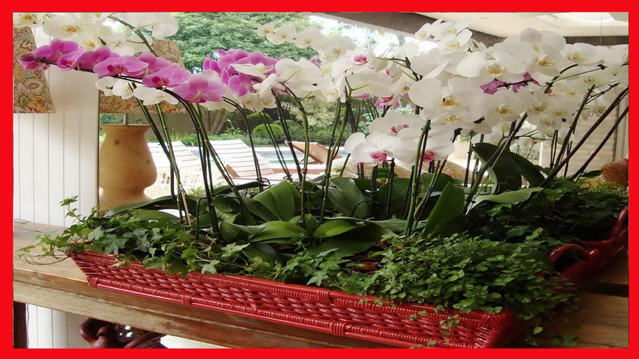 Como cultivar orquideas como cuidar orqu deas phalaenopsis - Cuidar orquideas en casa ...