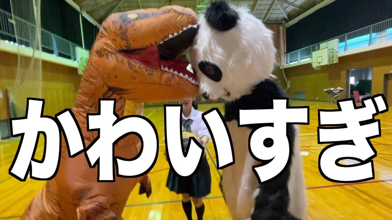 【対決】爆笑ハプニングだらけ!?恐竜VSパンダのマスコット対決!