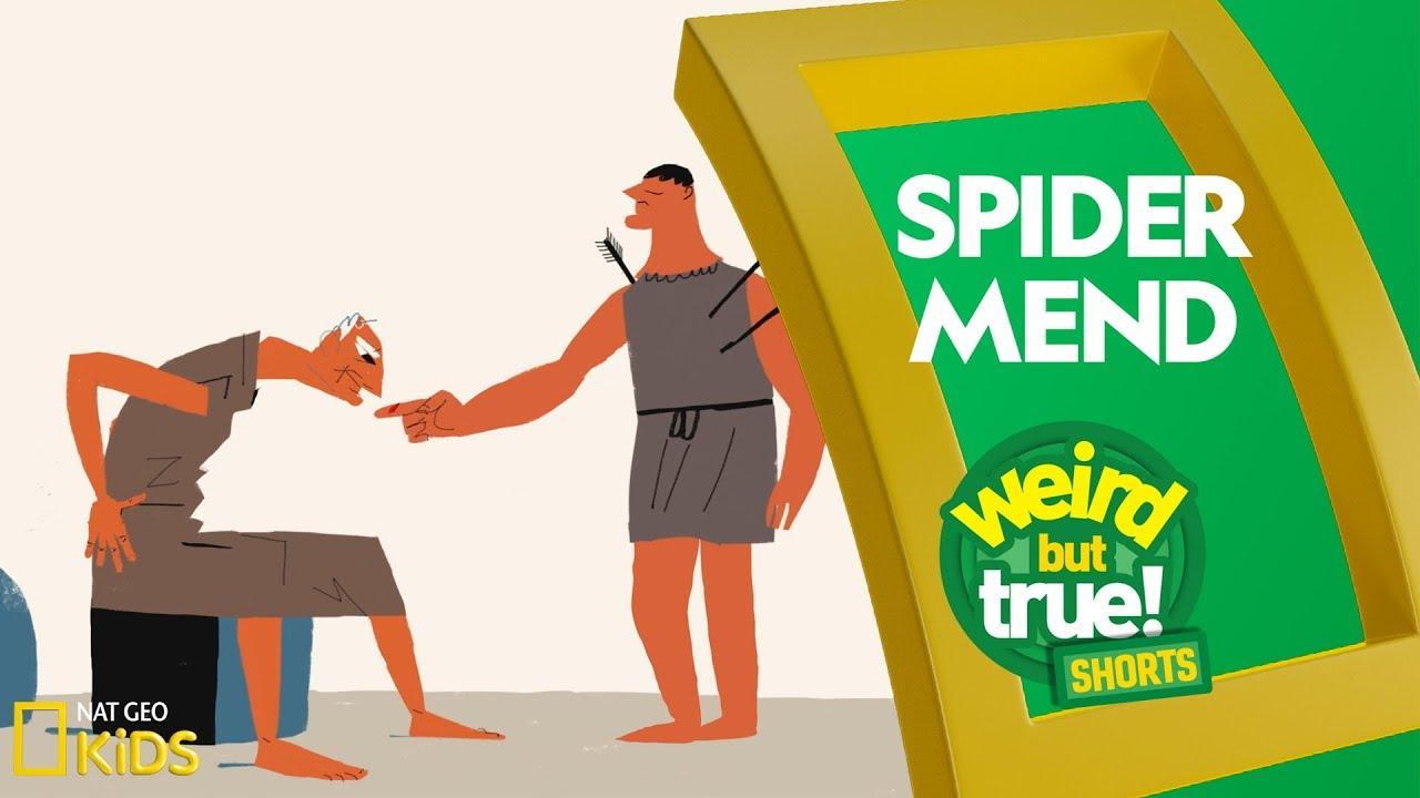 Spider Mend | Weird But True! Shorts