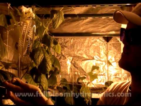 & Big Buddha Box with Grow Room Tent - YouTube