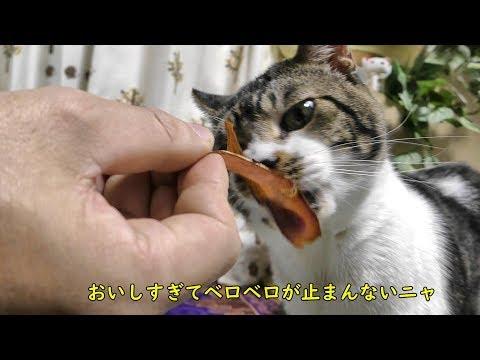 A cat that licks bonito.