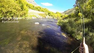 Provo River Flyfishing with The Local Angler
