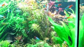 Аквариум с яркими рыбками (шанхайский океанариум, 2010)(В сентябре 2010 года сотрудники редакции журнала «Потребитель» съездили в командировку в китайский Шанхай...., 2011-01-31T15:37:42.000Z)