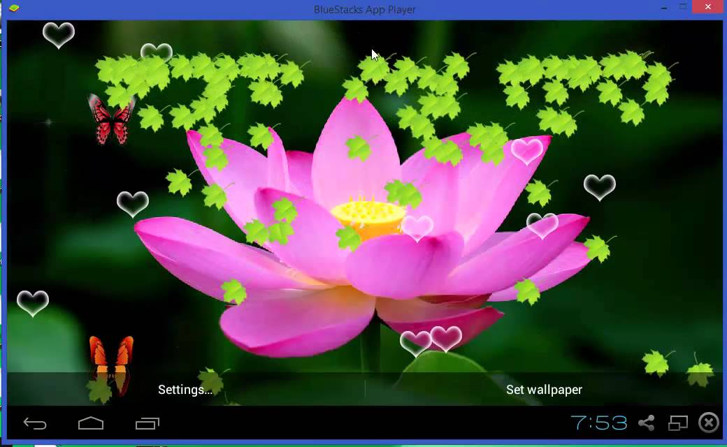 cooee lotus live