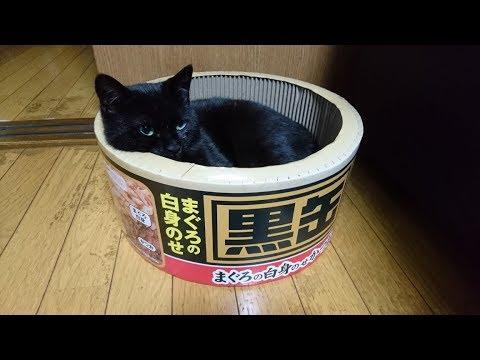 里親さんからの写真&「俺は慎重な男」黒くん 子猫 保護29日目 thumbnail