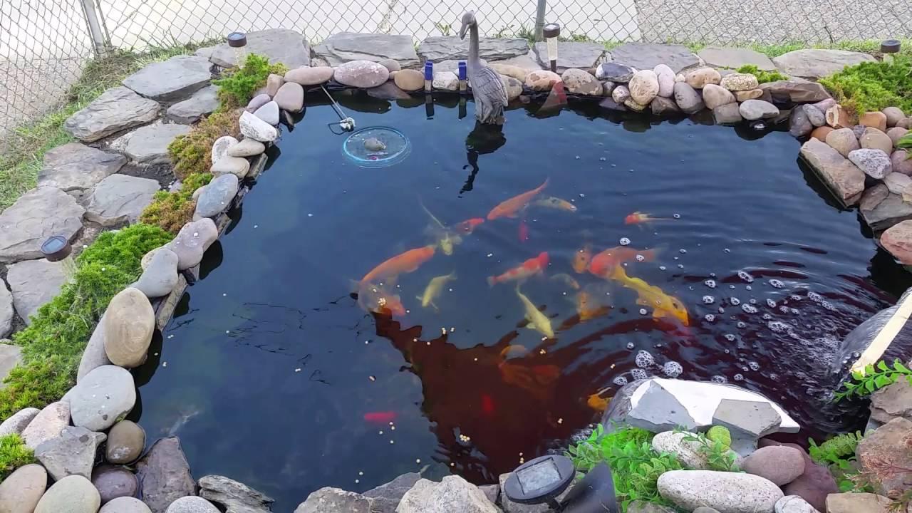 810 gallon koi pond youtube for Koi pond gallons