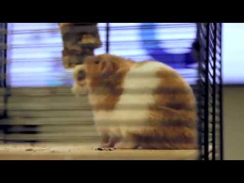 The Great Hamster Art Experiment