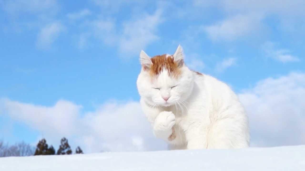 雪の中の白い猫