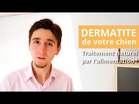 Dermatite atopique du chien : traitement naturel pour