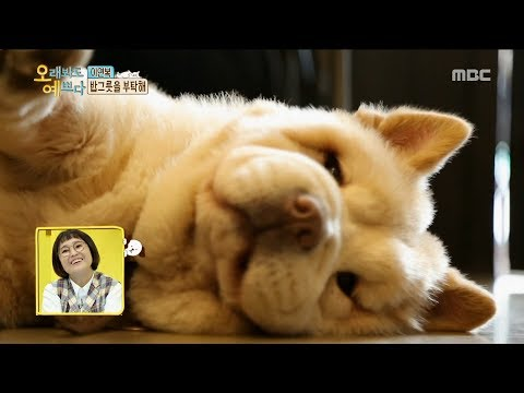 [hot]-can-a-dog-and-a-cook-be-friends?,-오래봐도-예쁘다-20190725