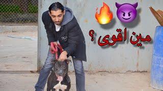 تحدي كلبي جاك مع كلب بيتبول 🔥🔥😈