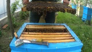 Третье расширение Даданов.Прикарпатська пасіка №17 Пчеловодство в Украине.(Композиция