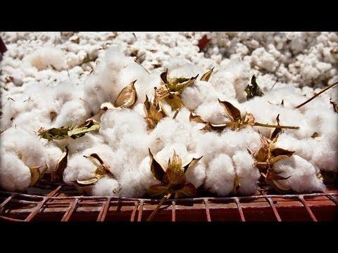 Prices of Raw Goods Plunge on Slowdown
