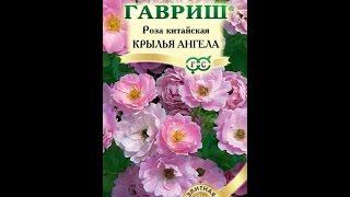 """Роза """"Крылья ангела"""" из семян."""