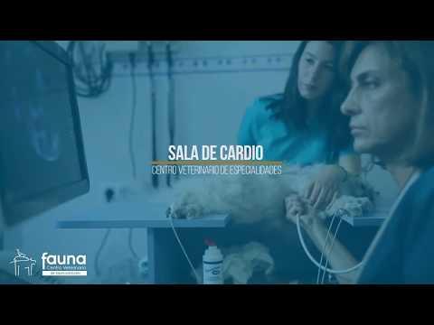 Cardiología - Clínica Fauna en Pontevedra