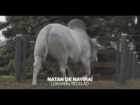 LOTE 03 - NATAN DE NAVIRAÍ