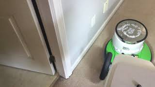 Oxy-Dry removing urine stains from hall carpet.