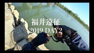 清流シーバスに、逢いに行く。2019 編【福井遠征DAY2】