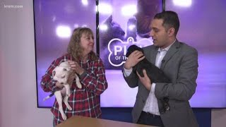 Meet this week's Pick of the Litter, two puppies from Oklahoma! (12-18-18)