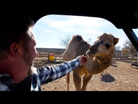 Exotic Animal Hobby Farm In TEXAS!