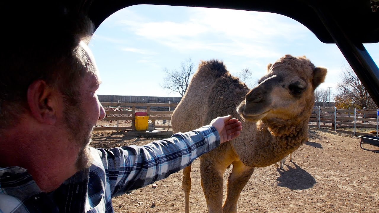 Exotic Animal Hobby Farm in TEXAS! - YouTube